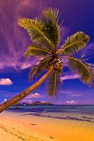Palm tree, Tokoriki Island Resort, Fiji Islands