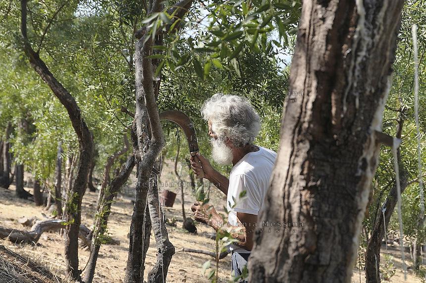 Castelbuono, Giulio Gelardi, the oldest and one of the last producers of manna in the world...Castelbuono, Giulio Gelardi, il più anziano e tra gli ultimi produttori di manna nel mondo.