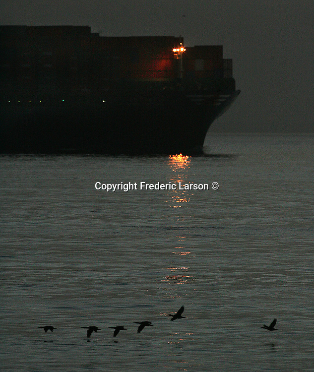 """The container ship """"Hyudai Confidence"""" steams out of the San Francisco Bay California under a headlight at dawn while a flock of birds fly near her bow."""