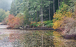 Vashon Island, Washington: Fisher pond in fall with Vine Maple and Douglas Firs along the shoreline