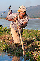 Myanmar, Burma.  Inle Lake, Shan State.  Burmese Man Using Long Pole to Relocate a Floating Island for Agricultural Purposes.  These floating islands of soil can be bought and sold.
