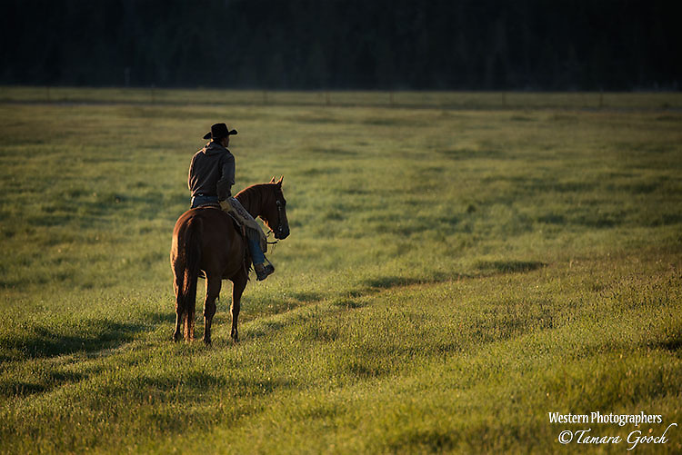 A photo of a cowboy partly silhoutted on horseback in the early morning light. Cowboy Photos, riding,roping,horseback