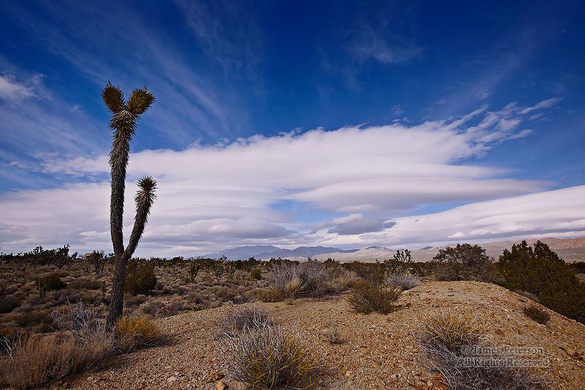 Lenticular Clouds with Joshua Tree, Mojave Desert, California.  Available in sizes up to 30 x 45 inches.