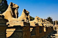 The Taharquo Line, Luxor Temple located in modern day Luxor or ancient Thebes, Egypt