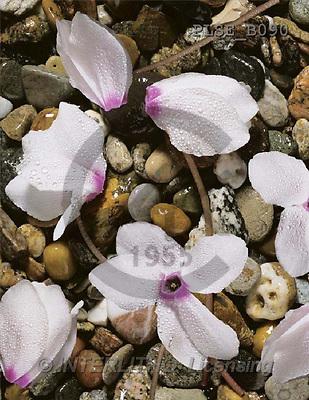 Jacek, FLOWERS, portrait, macro, photos, PLSE, PLSEB090,#F# Blumen, flores, retrato