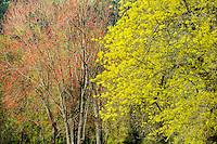 Spring Trees, Washington