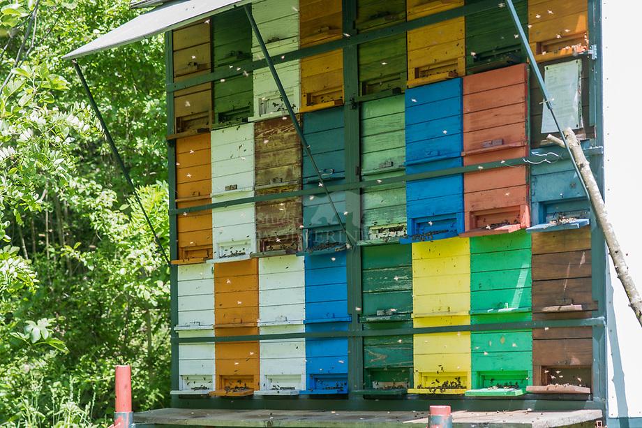 Bijenkasten, Slovenie