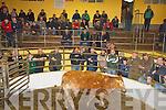 Farmers bidding at Castleisland Mart on Wednesday   Copyright Kerry's Eye 2008