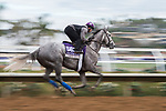 DEL MAR, CA - NOVEMBER 02: Unique Bella, owned by Don Alberto Stable and trained by Jerry Hollendorfer, exercises in preparation for Breeders' Cup Filly & Mare Sprint at Del Mar Thoroughbred Club on November 2, 2017 in Del Mar, California. (Photo by Jamey Price/Eclipse Sportswire/Breeders Cup)