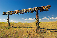 old cowboy boots hung up to dry on old ranch<br /> Near Sceptre<br /> Saskatchewan<br /> Canada