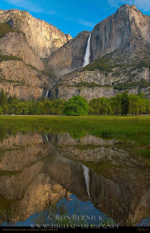 Yosemite Falls Reflected in Cook's Meadow at Dawn, Yosemite National Park