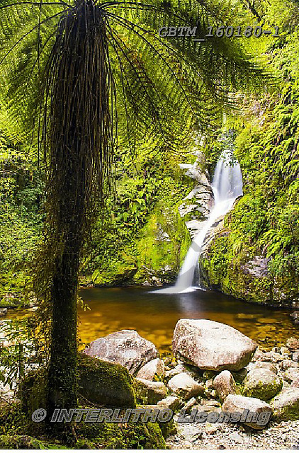 Tom Mackie, LANDSCAPES, LANDSCHAFTEN, PAISAJES, photos,+Dorothy Falls, New Zealand, Tom Mackie, Worldwide, beautiful, cascade, cascading, flow, flowing, green, holiday destination,+peaceful, portrait, rain forest, restoftheworldgallery, scenery, scenic, tourist attraction, tranquil, tranquility, tree, tre+e fern, trees, tropical, upright, vacation, vertical, water, water's edge, waterfall, waterfalls,Dorothy Falls, New Zealand,+Tom Mackie, Worldwide, beautiful, cascade, cascading, flow, flowing, green, holiday destination, peaceful, portrait, rain for+,GBTM160180-1,#l#