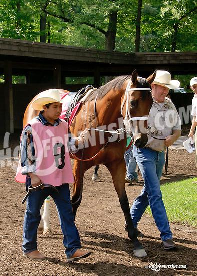 Amizzen Grace in the paddock at Delaware Park on 7/30/14