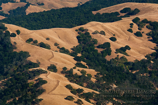 Oak and grass covered hills in summer along the slopes of Mount Diablo State Park; California