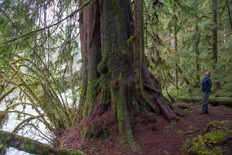 Hoh River, Hoh River Trust, The Nature Conservancy, TNC, forest ecologists, stream ecologists, assessing, forest habitat, river habitat, spring, 2017 Olympic Peninsula, Washington State, Pacific Northwest, USA,
