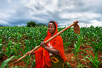 Morogoro, Tanzania 2014. BRAC PROJECT, GPAF project (Global Poverty Action Fund). Agriculture project, women working in maize cornfields. Collective crop demonstration, 8 women 8 acres, work together to produce corn. Helena Maroda