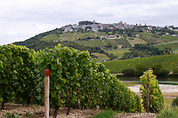 Vineyard. Sauvignon Blanc. View of Sancerre village. Domaine de la Perriere, Sancerre, Loire, France