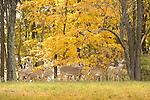 Wild Animals: Deer