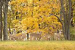 Wild Animals: Deer