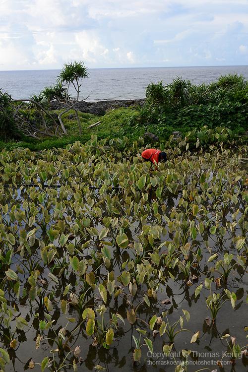 Orchid Island (蘭嶼), Taiwan -- Yam field.