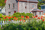 Poppies in Stonington, Maine, USA
