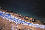 European Bison, Kavkazsky Zapovednik Biosphere Preserve, Russia