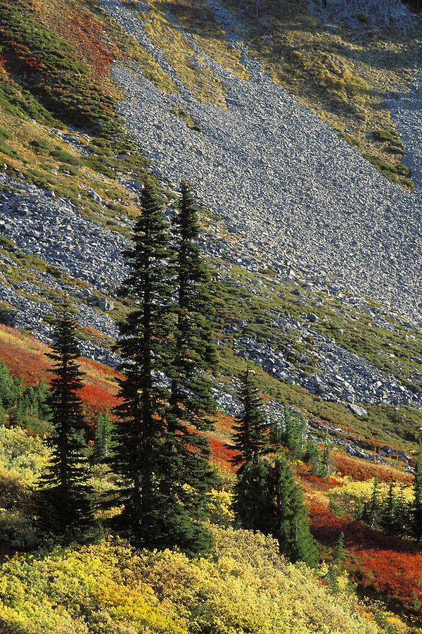 Fall colored meadows, Paradise Valley, Mount Rainier National Park, Pierce County, WA