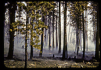 35mm Forest Fire Photography
