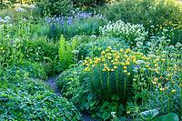 France, Hautes-Alpes (05), Villar-d'Arène, jardin alpin du Lautaret, plantes des Pyrénées avec lis des Pyrénées