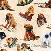 Marcello, GIFT WRAPS, GESCHENKPAPIER, PAPEL DE REGALO, paintings+++++,ITMCGPED1425,#GP#, EVERYDAY,puppies,dogs