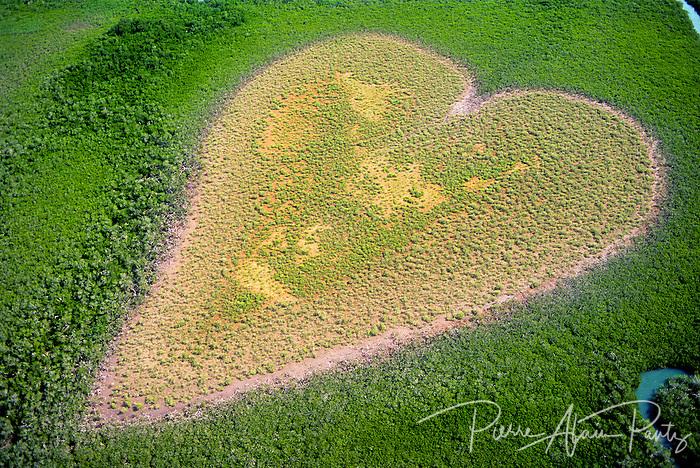 Un coeur naturel dans la mangrove, Voh