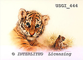 GIORDANO, REALISTIC ANIMALS, REALISTISCHE TIERE, ANIMALES REALISTICOS, paintings+++++,USGI444,#A# tiger
