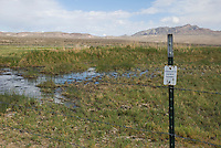 Nature Conservancy property in Oasis Valley, Nevada, habitat of Amargosa toad, Bufo nelsoni