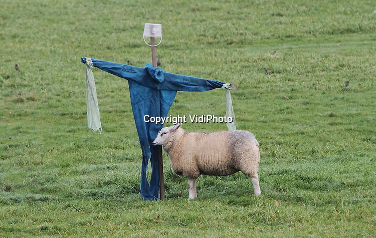 Foto: VidiPhoto..LIENDEN - Op zoek naar... warmte, genegenheid, of een partner? Of ruikt de overall in de uiterwaarden van het Betuwse Lienden misschien nog naar de boer? Ook schapen hebben liefde nodig. Van een vogelverschrikker is dat echter niet zo snel te verwachten..