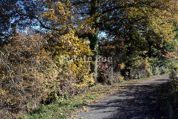 small rural countryside road during autumn season