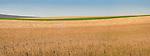 Fall Field Panorama, Union County
