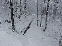 FOREST_LOCATION_90164