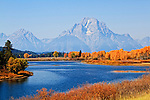 Fall trees grace the beautiful landscape in front of Mount Moran in Grand Teton National Park in Jackson Hole, Wyoming.