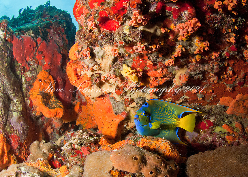Coral reef scenic with a Queen angelfish<br /> Cow Rock<br /> Virgin Islands