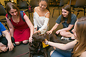 Students take a break from their final exam studies to pet Whiskey, a 4-year-old chocolate lab, during Puppies in Perkins today. Whiskey was just one of the therapy dogs on hand - other pooches included two collies and a bull mastiff.