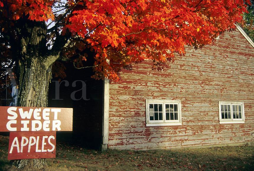 "Northampton, Massachusetts&#xA;Brilliant color and ""apples"" say autumn in New England<br />"