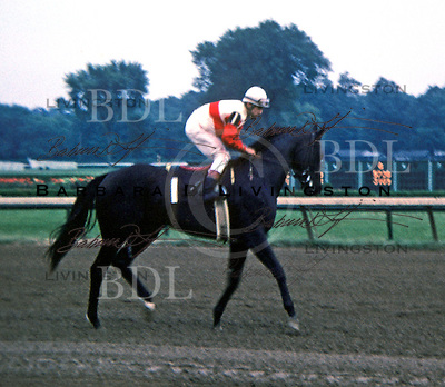 Ruffian before 1974 Spinaway - Saratoga Race Course