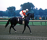 Ruffian before 1974 Spinaway - Saratoga Race Course