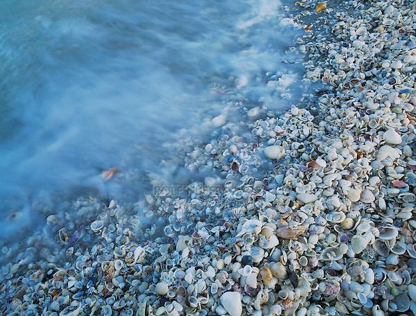 Shells at beach, Sanibel Island, Florida, USA