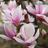 Gisela, FLOWERS, BLUMEN, FLORES, photos+++++,DTGK1902,#f#