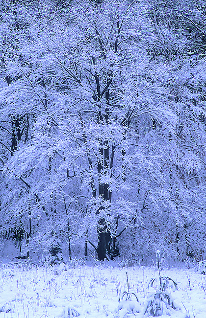 A fresh blanket of snow coats a tree in the forest along Birchwood Road in northern Door County, Wisconsin.