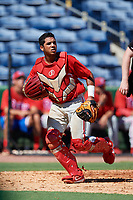 Philadelphia Phillies catcher Freddy Francisco (6) follows the play during a Florida Instructional League game against the New York Yankees on October 12, 2018 at Spectrum Field in Clearwater, Florida.  (Mike Janes/Four Seam Images)