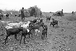 A Turkana village nr Lokitaung triangle in the  Northern part of the Kenya.<br /> The Turkana are herders of sheep and goats and  are constantly migrating with their herds in search of  fresh pastures.