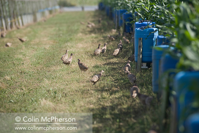 England - Lancashire - Game Bird Farm | Colin McPherson
