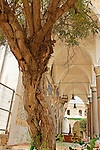 Israel, Acco. Chaste tree in Al Jazzar Mosque